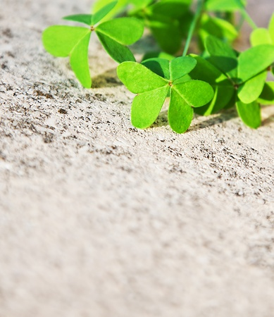 Fresh clover leaves over stone, green spring floral border, lucky shamrock, St.Patrick's day holiday symbol, abstract natural background Stock Photo - 12589239