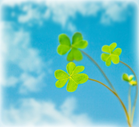 Abstract natural background, clover over sky, fresh green spring plant in blue sky, floral border, st.Patricks day, holiday luck symbol photo