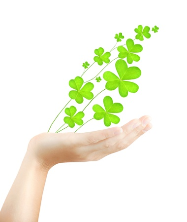 irish woman: Female hand holds fresh clover plant, green spring leaves, shamrock branch isolated over white background, St. Patricks day, holiday lucky symbol Stock Photo