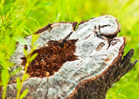 protect earth: Deforestation, dead tree stump, save nature and protect earth, conceptual image of environmental damage and forest pollution