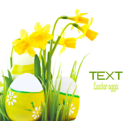 Painted Easter eggs border with yellow narcissus flowers, festive traditional food for spring Christian holiday, colorful still life, decoration isolated over white background photo