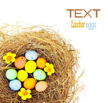 Border of Easter colorful eggs in the nest, festive traditional food for spring Christian holiday, colorful still life, decoration isolated over white background  photo