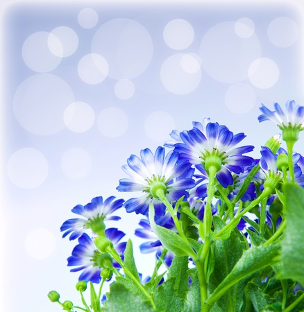 Floral border, fresh spring blue blooming flowers over abstract background Stock Photo - 12879557