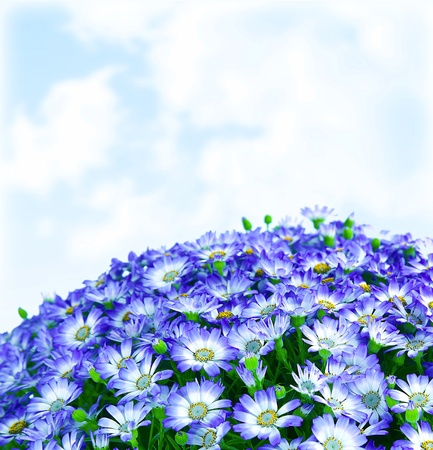 cornflowers: Floral daisy border, fresh spring blue blooming flowers over sky background, wildflowers field, natural plant glade, fresh meadow