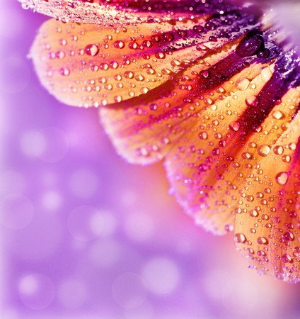closeup of pink daisy with: Abstract beautiful flower, colorful floral background , wet yellow petals border, daisy plant with bokeh , nature macro details, romantic decoration