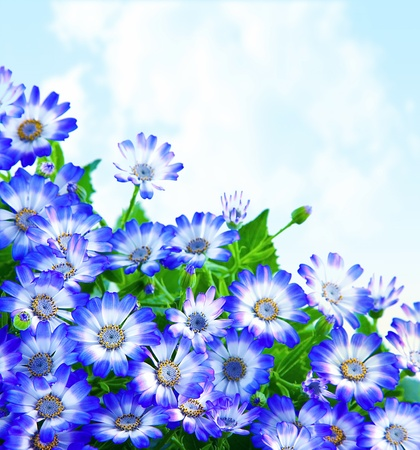 blue flowers: Floral daisy border, fresh spring blue blooming flowers over sky background, wildflowers field, natural plant glade, fresh meadow