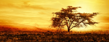 landscape: Big African tree silhouette over sunset, single tree on the field, beautiful panoramic image of nature at Africa, summer evening peaceful landscape of Masai Mara