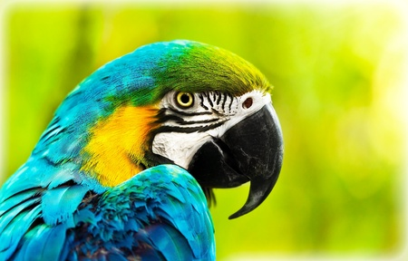 Exotic colorful African macaw parrot, beautiful close up on bird face over natural green background, bird watching safari, South Africa wildlife  Stock Photo