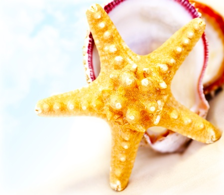 Starfish on the beach, conceptual image of tropical summer vacation and relaxation photo