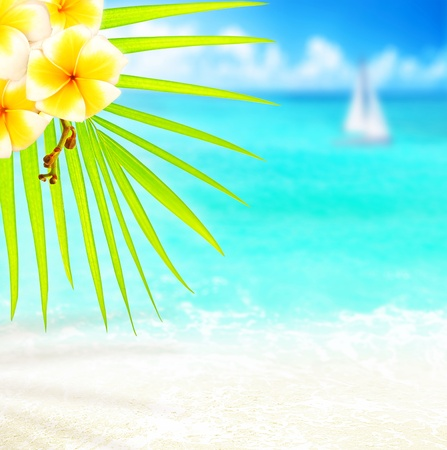 Selective focus on palm tree branch over tropical beach background, blue sea landscape, natural abstract card, floral border with frangipani plant, conceptual image summer of vacation and travel photo
