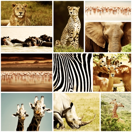 African wild animals safari collage, large group of fauna diversity at African continent, natural themed collection background, beautiful nature of Kenya, wildlife adventure and travel photo
