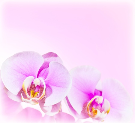 Pink Orchid flower border, delicate natural floral background, abstract macro on fresh plant, love symbol, romantic design of holiday greeting card photo