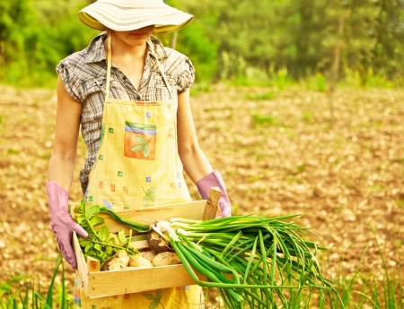 Happy woman gardener working on field, young female holding chest, girl growing organic green vegetables and fruits, summer garden, rural leisure outdoor, lady farmer, potato and onion harvest season