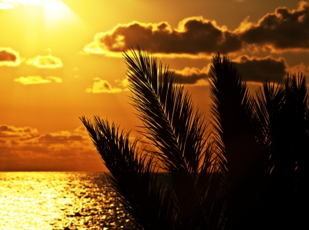 Palm tree silhouette at sunset on the beach, beautiful summertime holidays background, romantic tropical beach vacation, dramatic dark orange sky with bright sun light, peaceful nature zen landscape Stock Photo - 14206880