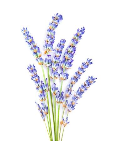 fiori di lavanda: Fiori di lavanda, Posy po 'di erbe aromatiche e medicinali vegetali freschi di fiori viola, aromaterapia spa, filiale organica floreale isolato su sfondo bianco
