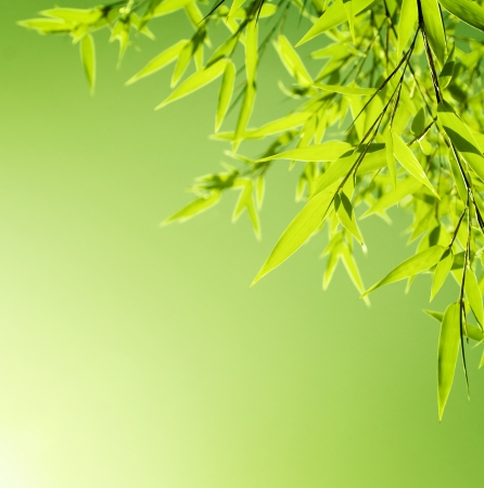 Fresh bamboo leaves border, green plant stalk at summer Japanese garden, abstract floral natural background, botanical zen forest, tropical spa decoration, backdrop with add space photo