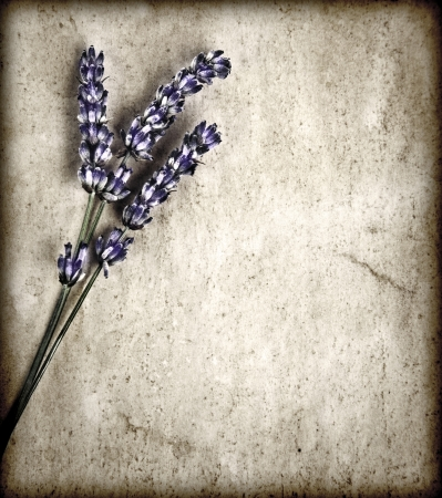 Lavender flowers isolated on gray grunge background, purple floral bouquet decorate grey grunge wall, violet wildflowers borders on old abstract backdrop, herbal medicine concept photo