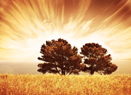grunge tree: Lonely old trees, grunge autumn background, warm orange sunlight, big dry oak tree on wheat field over sunset, South Africa view, rural meadow, autumnal countryside scenery, wood over cloudy sky