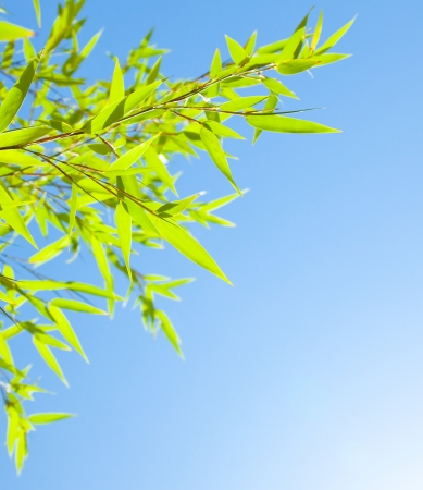 Fresh bamboo leaves border, green plant stalk over sunny blue summer sky, abstract floral natural background, botanical zen forest, tropical spa decoration photo