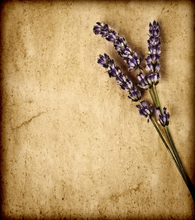 Lavender flowers isolated on brown textured background, decorative purple floral bouquet on old grey grunge paper, violet wildflowers borders on abstract backdrop, herbal medicine concept photo