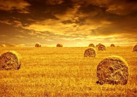 harvest time: Harvest time of wheat, beautiful sunset, scenic landscape, golden rye field with haystack, season of crop, farm producing food, cultivated organic seeds of bread, beauty of nature in autumn