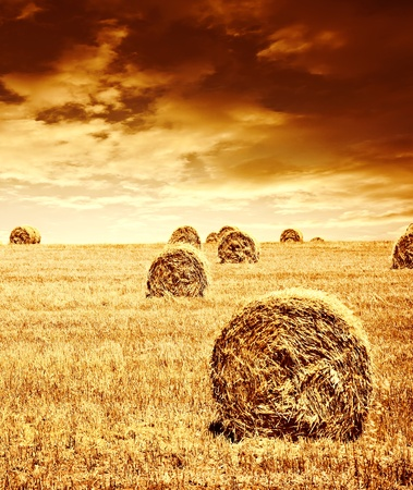 bale: Harvest time of wheat, beautiful sunset, scenic landscape, golden rye field with haystack, season of crop, farm producing food, cultivated organic seeds of bread, beauty of nature in autumn