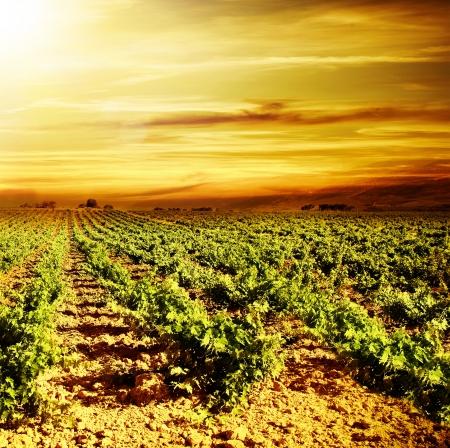 Vineyard autumn landscape photo