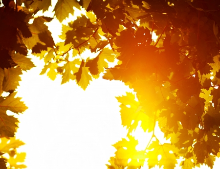 Autumn leaves frame, photo of sunlight through fresh grape leaves, natural background, orange autumnal foliage border, winery industry, copy space, trees in the fall and bright yellow sun beam   photo
