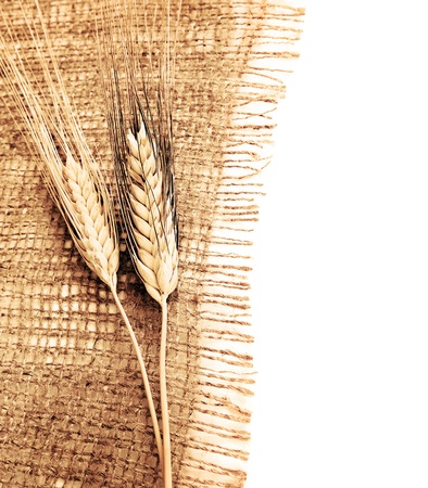 Wheat border over canvas background, harvest time, thanksgiving holiday decoration photo