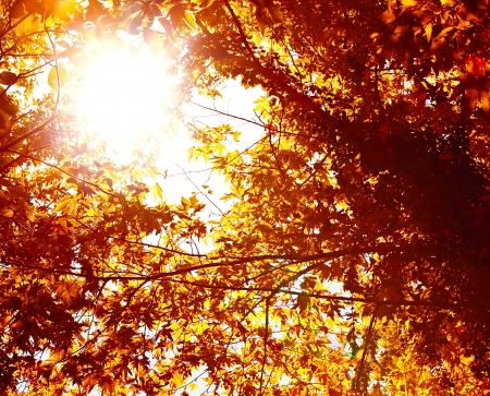 Picture of abstract autumnal background, nature environment, beautiful golden leaves backdrop, shiny sunlight though dry orange trees foliage, autumn season, fall nature, maple trees leaf   photo