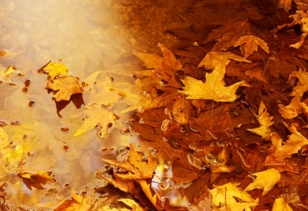 Photo of golden autumn leaves background photo