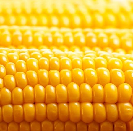 mais: Image of yellow corn Hintergrund, gesunde Bio-Lebensmittel, Bio-Ern�hrung, frische reife Gem�se, Maiskolben, golden strukturierte Tapeten, Herbst Ernte, vegetarische Ern�hrung und Di�t-Konzept