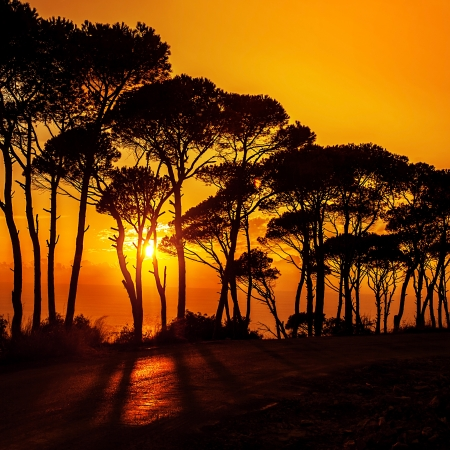 Picture of beautiful trees on sunset photo