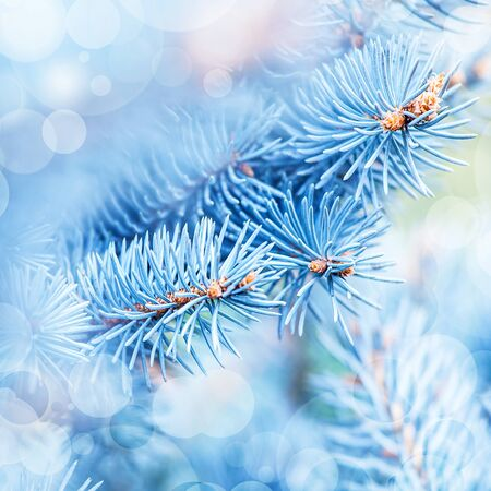 Photo of frozen fir tree background photo