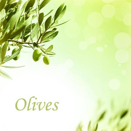 rama de olivo: Foto de la frontera con rama de olivo