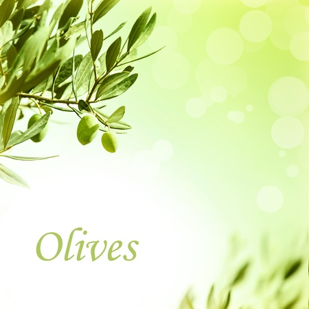 plant oil: Photo of olive branch border