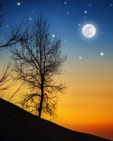 skyscape: Picture of big dry tree in moonlight, silhouette of wood on hill on dark night background, bright moon with shining stars in sky, wintertime nature, dramatic sunset, starry dusk, beautiful landscape
