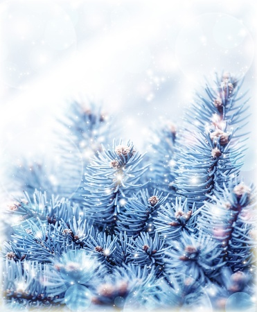 frost covered: Image of snowy fir tree background, abstract natural backdrop, pine tree branch covered hoar, coniferous twig border, beautiful winter season, New Year greeting card, Christmas holidays