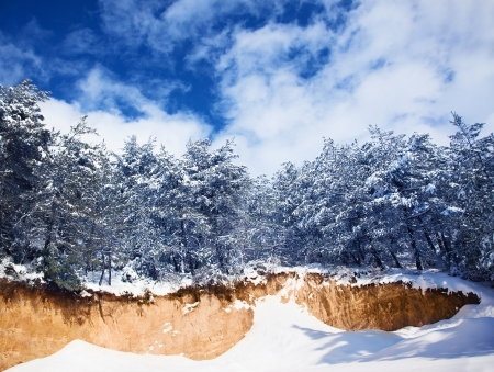 Photo of a beautiful winter forest, big spruce covered with snow, natural landscape with old Christmas trees over blue sky, fresh wintertime scene, seasonal cold weather, earth beauty photo
