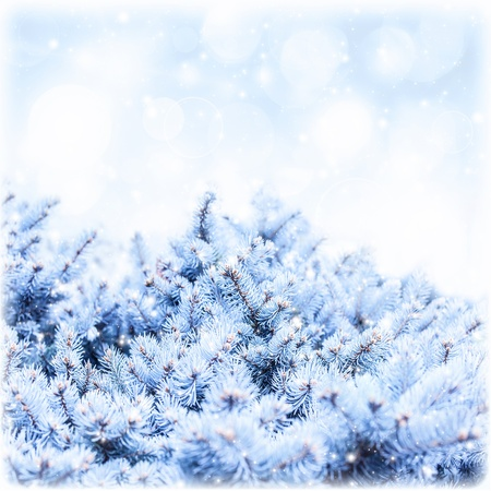 fir branch covered white snow on blue sky background, rime on pine tree border, winter floral backdrop, New Year greeting card, copy space, snowy forest, wintertime holidays, greeting card photo