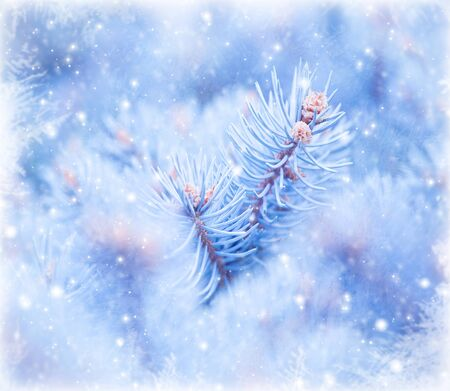Photo of winter view from window, natural blue background, Christmas tree branch covered with cold hoarfrost, snowfall outdoors, spruce twig covered white snowflakes, wintertime weather  photo