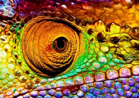 jaszczurka: Zdjęcie kolorowych gadów oka, część przednia bliska kameleon, multicolor łuszcząca się skóra jaszczurki, african zwierząt, piękne, egzotyczne, iguana, dzika przyroda, fauna lasów deszczowych Zdjęcie Seryjne