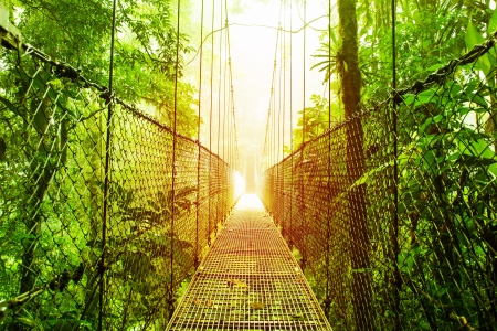 fortuna: Picture of Arenal Hanging Bridges Ecological reserve, natural rainforest park, La Fortuna de San Carlos city, Costa Rica, Central America, footbridge in jungle, travel and tourism concept Stock Photo