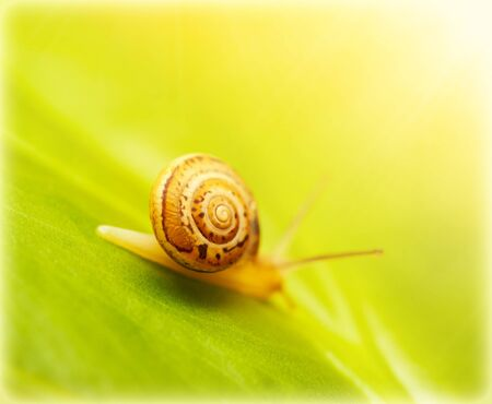 gastropod: Image of cute little snail on fresh green leaf in the park in sunny day, wild nature, flora and fauna, small mollusk with helix house, gastropod insect slow crawling on the grass, wildlife in forest Stock Photo