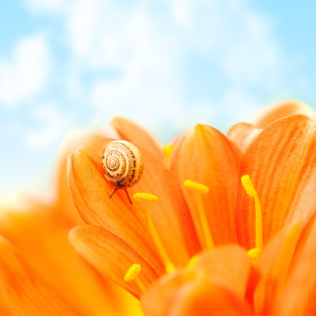Photo of little snail crawling on crocus flower over blue sky background, floral border, small escargot on petals of blossom gerbera, wild nature, spring season, insect in the shell, flora in the park photo