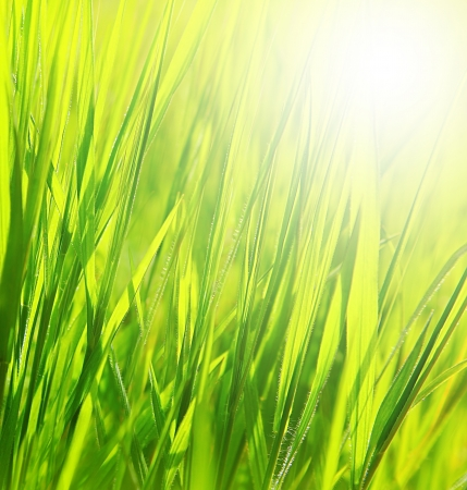 Image of fresh green grass background, spring nature, grassy border with bright yellow sun light, abstract natural backdrop, rural field, earth and ecology, sunny day, outdoors in summertime  photo