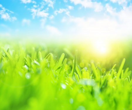 Picture of beautiful green grass field and clear blue sky with bright sunlight, selective focus, wonderful landscape, spring season, rural place, nature outdoors, meadow in countryside Stock Photo - 17984831