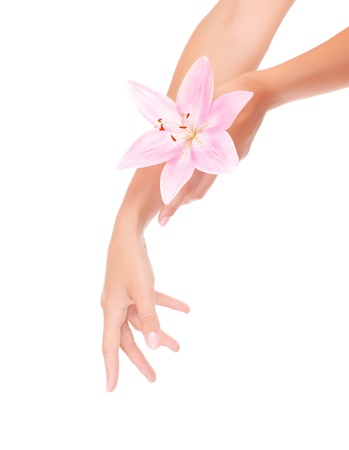 day lily: Photo of pure womens hands holding pink lily flowers isolated on white background, body care, day spa, luxury beauty salon, spring season, herbal arms cream, beautiful manicure, health treatment