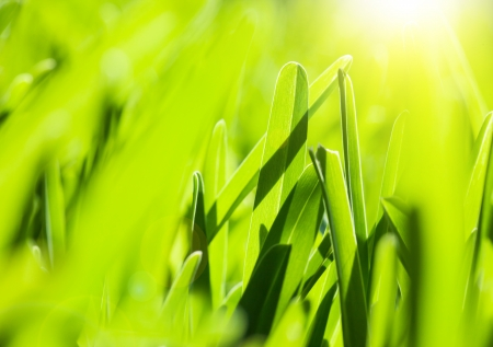 Photo of fresh green grass background, spring nature, grassy border with bright yellow sun light, abstract natural backdrop, earth and ecology, sunny day, soft focus, environment protect concept photo
