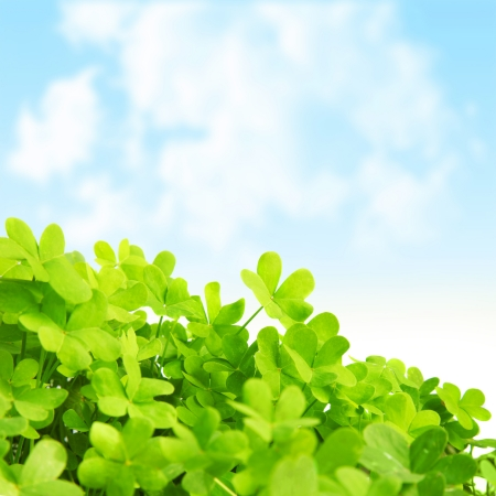 lucky plant: Picture of green clover field, st.Patricks day background Stock Photo